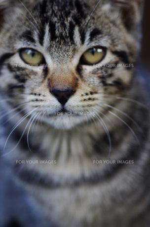 猫の顔 FYI00164056