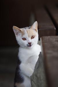 猫 FYI00164058