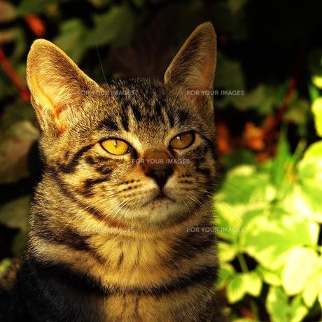 猫 FYI00164060