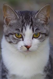 猫 FYI00164062
