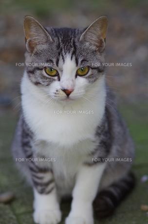 猫 FYI00164089