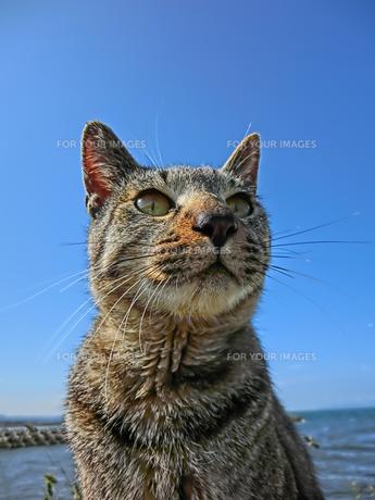 青空と猫 FYI00164149