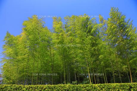 竹林 FYI00165691