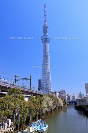 東京スカイツリー FYI00165906