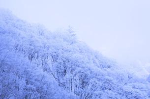 冬の樹木 FYI00166084