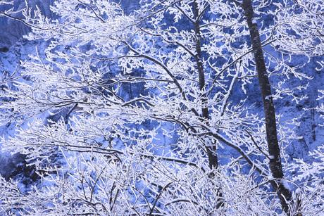 冬の樹木 FYI00166098