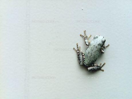 frog FYI00168260