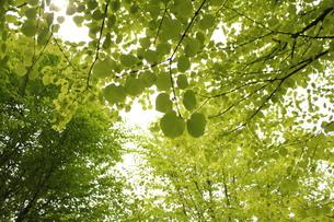 黄緑色の空 FYI00168538