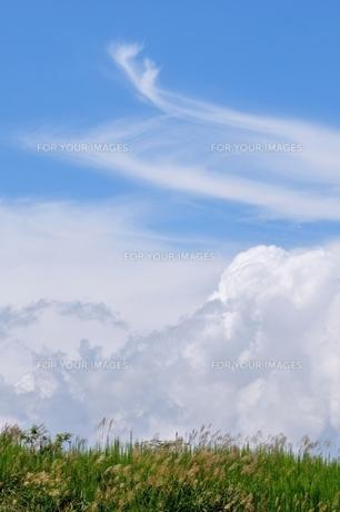 ススキと雲と青空 FYI00170115