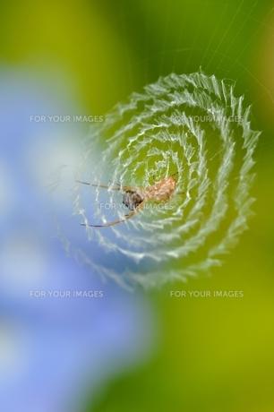 蜘蛛と蜘蛛の巣 FYI00170691