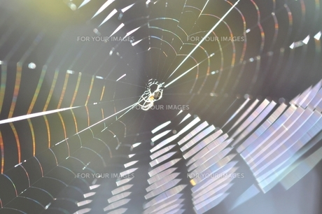 蜘蛛の糸 FYI00170719