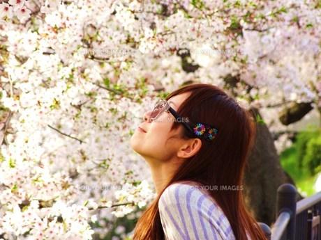 桜の中のメガネ少女 FYI00171147