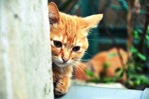野良猫は見た FYI00172444