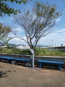 木と空と道と FYI00173903