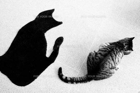 お食事中の猫 FYI00173923