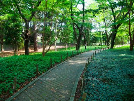 緑の道 FYI00173935