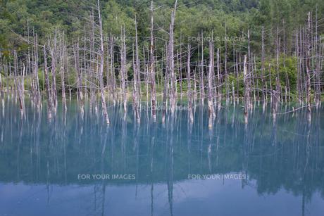 青い池 FYI00173945