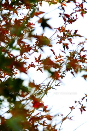 赤と緑と FYI00174064