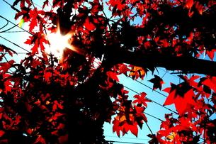 太陽と紅葉 FYI00174079