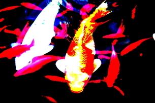 鯉 FYI00174082