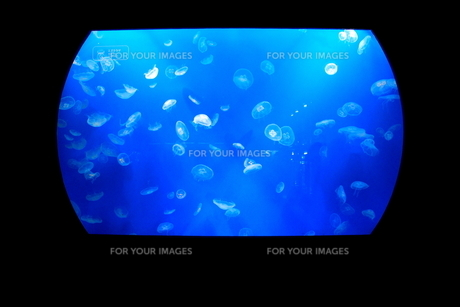 クラゲ上映会‐神秘のスクリーン‐ FYI00174283