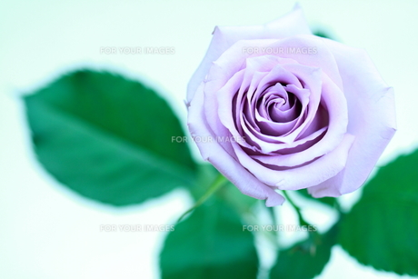 Bloom Prayer. FYI00174451
