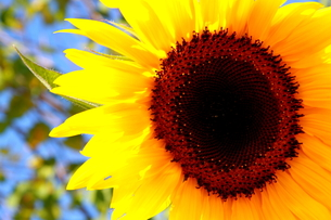 Smile of sun. FYI00174671
