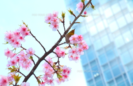 都会の春。 FYI00174752