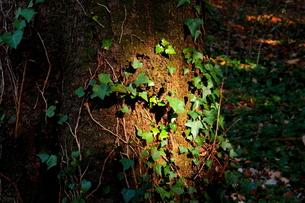 自然のスポット・ライト FYI00174776