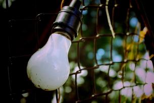 自然の中の電球 FYI00174916