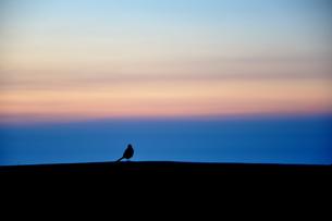朝日を背にした小鳥 FYI00175978