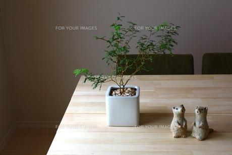 観葉植物と置物 FYI00177618