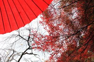 紅葉 もみじ FYI00178628