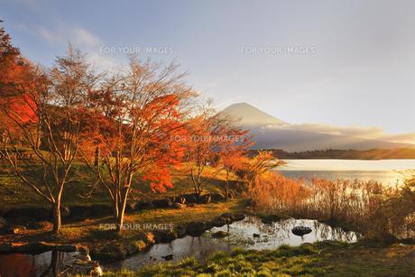 紅葉と富士♪ FYI00180267