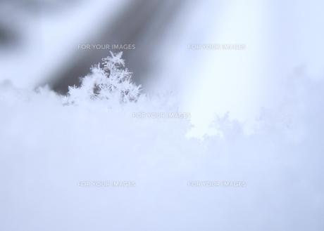 雪の結晶のツリー FYI00180416