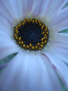 お花のドアップ FYI00181111