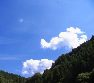 夏の空 FYI00181131