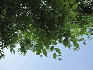 葉っぱと空 FYI00181157