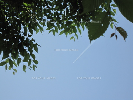 飛行機雲を見上げる FYI00181158