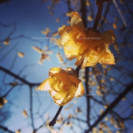 黄色い花 FYI00181200