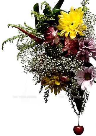 flower FYI00181664