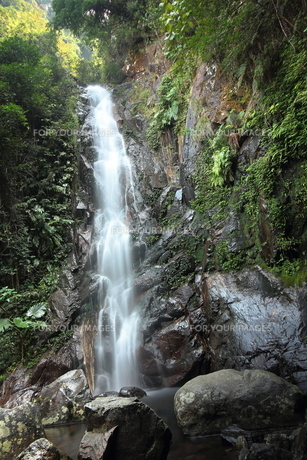 滝 FYI00185601