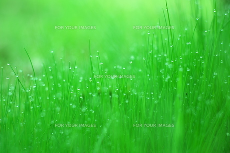 雨上がりの緑 FYI00186860
