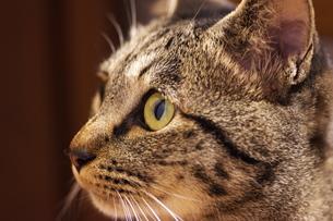 見つめる猫 FYI00186870