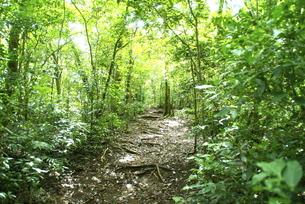 森の中 FYI00187835