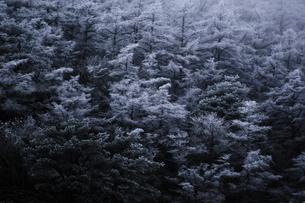 樹氷 FYI00190683