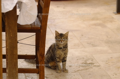 トルコ カッパドキアの猫 FYI00192894
