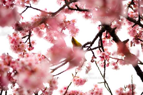 春うららかな日常 FYI00193549