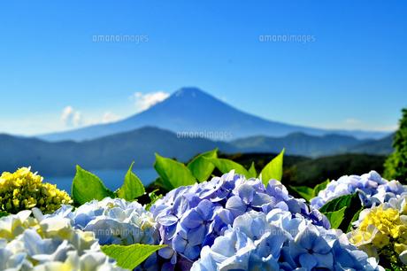 紫陽花と富士山(大観山の夏) FYI00193560