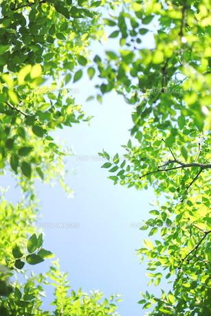 新緑と青空 FYI00197468